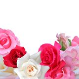 Tarjeta de felicitación de las rosas Imagen de archivo libre de regalías