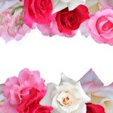 Tarjeta de felicitación de las rosas Fotos de archivo