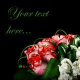 Tarjeta de felicitación de rosas rojas y blancas fotografía de archivo