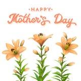 Tarjeta de felicitación del día de madres con los lirios anaranjados Fotos de archivo
