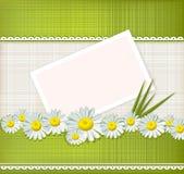 Tarjeta de felicitación del vector con las margaritas Imagenes de archivo