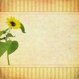 Tarjeta de felicitación del vintage Fotografía de archivo libre de regalías
