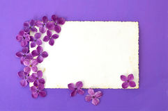 Tarjeta de felicitación en blanco y flores violetas de la lila Fotos de archivo