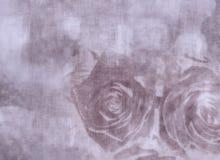 Tarjeta de felicitación en colores pastel, tarjeta del día de tarjeta del día de San Valentín con las rosas Imagen de archivo libre de regalías