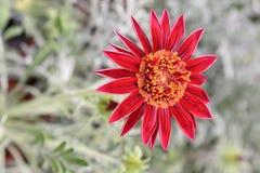 Tarjeta de felicitación exótica de la flor Fotografía de archivo