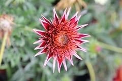 Tarjeta de felicitación exótica de la flor Imágenes de archivo libres de regalías