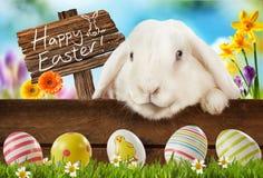 Tarjeta de felicitación feliz de Pascua con el conejito blanco Fotografía de archivo
