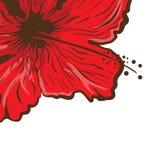 Tarjeta de felicitación Flor del hibisco en estilo del tatuaje Flor tropical gráfica Foto de archivo libre de regalías