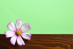 Tarjeta de felicitación floral con el espacio de la copia fotos de archivo