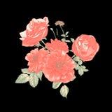 Tarjeta de felicitación floral con las rosas rojas Fotos de archivo libres de regalías