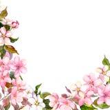Tarjeta de felicitación floral Flores blancas, rosadas de Sakura de la cereza watercolor libre illustration