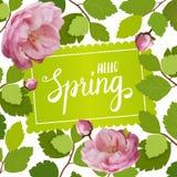 Tarjeta de felicitación hermosa con un marco de las rosas y de las letras de la primavera rosas 3d Imágenes de archivo libres de regalías