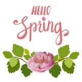 Tarjeta de felicitación hermosa de la primavera con una rosa hermosa del rosa y letras en un fondo blanco Foto de archivo libre de regalías