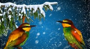 Tarjeta de felicitación de las vacaciones de invierno con el pájaro alegre dos Fotografía de archivo