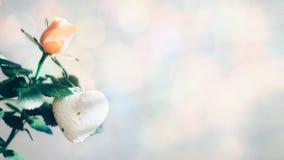 Tarjeta de felicitación moderna mínima de día de San Valentín, bandera, maqueta con el espacio de la copia Rosas coralinas con la fotos de archivo