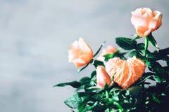 Tarjeta de felicitación moderna mínima de día de San Valentín, bandera, maqueta con el espacio de la copia Rosas coralinas con la foto de archivo libre de regalías