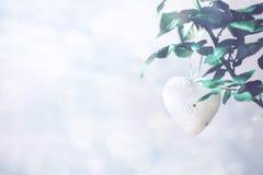 Tarjeta de felicitación moderna mínima de día de San Valentín, bandera, maqueta con el espacio de la copia Rosas coralinas con la fotos de archivo libres de regalías