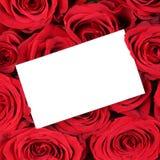 Tarjeta de felicitación vacía con el copyspace en rosas rojas en valle del cumpleaños Foto de archivo libre de regalías