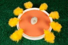 Tarjeta de felicitación vibrante de Pascua de la diversión Fotografía de archivo libre de regalías