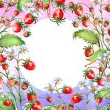 Tarjeta de felicitaci?n de la acuarela, invitaci?n con una fresa de la planta Arbusto floreciente con una baya y una flor rojas libre illustration