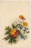 Tarjeta de felicitación 01 Imagen de archivo