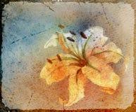Tarjeta de la acuarela con el lirio Imagen de archivo libre de regalías