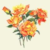 Tarjeta de la acuarela con las rosas amarillas del jardín Fotografía de archivo libre de regalías
