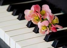 Tarjeta de la condolencia con la flor del membrillo fotografía de archivo libre de regalías