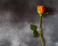 Tarjeta de la condolencia con la rosa del amarillo Foto de archivo