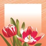 Tarjeta de la enhorabuena con los tulipanes Imágenes de archivo libres de regalías