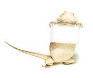 Tarjeta de la explotación agrícola del lagarto a disposición Fotografía de archivo