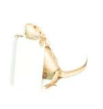 Tarjeta de la explotación agrícola del lagarto a disposición en blanco Imagen de archivo libre de regalías