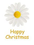 Tarjeta de la feliz Navidad con una margarita Imagen de archivo libre de regalías