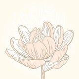 Tarjeta de la flor de la primavera Imagen de archivo libre de regalías