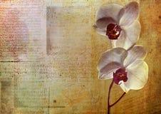 Tarjeta de la flor de la vendimia Fotografía de archivo libre de regalías