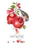 Tarjeta de la granada del pinzón libre illustration