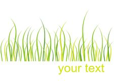 Tarjeta de la hierba Imagenes de archivo
