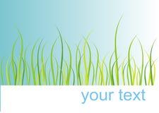 Tarjeta de la hierba Foto de archivo