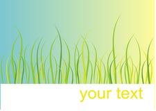 Tarjeta de la hierba Imagen de archivo libre de regalías