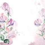 Tarjeta de la invitación con el chapoteo del guisante de olor y de la acuarela Tarjeta de felicitación pintada a mano floral Fotografía de archivo