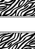Tarjeta de la invitación de la bandera del estampado de zebra Imagen de archivo