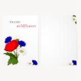 Tarjeta de la plantilla con las flores manzanilla, acianos ilustración del vector