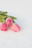 Tarjeta de la primavera con los tulipanes en la nieve Imagen de archivo libre de regalías