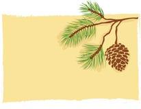 Tarjeta de la ramificación del pino stock de ilustración