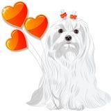 Tarjeta de la tarjeta del día de San Valentín con el perro maltés y los corazones stock de ilustración