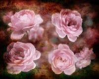 Tarjeta de la vendimia con las rosas Fotos de archivo libres de regalías