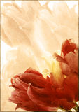 Tarjeta de la vendimia con un ramo de tulipanes Imagen de archivo libre de regalías