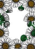 Tarjeta de las flores de la margarita libre illustration
