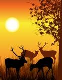 Tarjeta de los ciervos Fotos de archivo libres de regalías