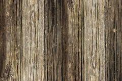 Tarjeta de madera de roble Imagen de archivo libre de regalías